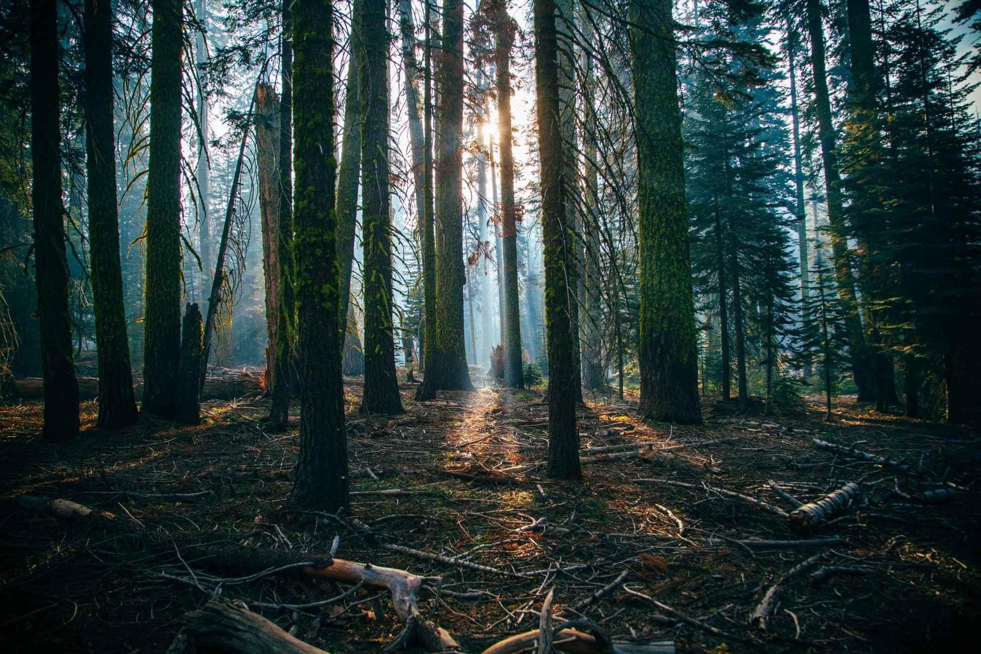 美新塑木-愛護森林減少砍伐