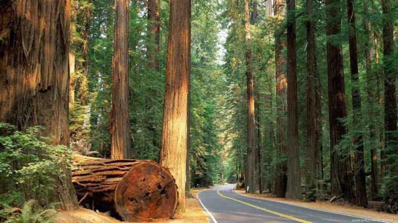 使用美新塑木-減少森林砍伐